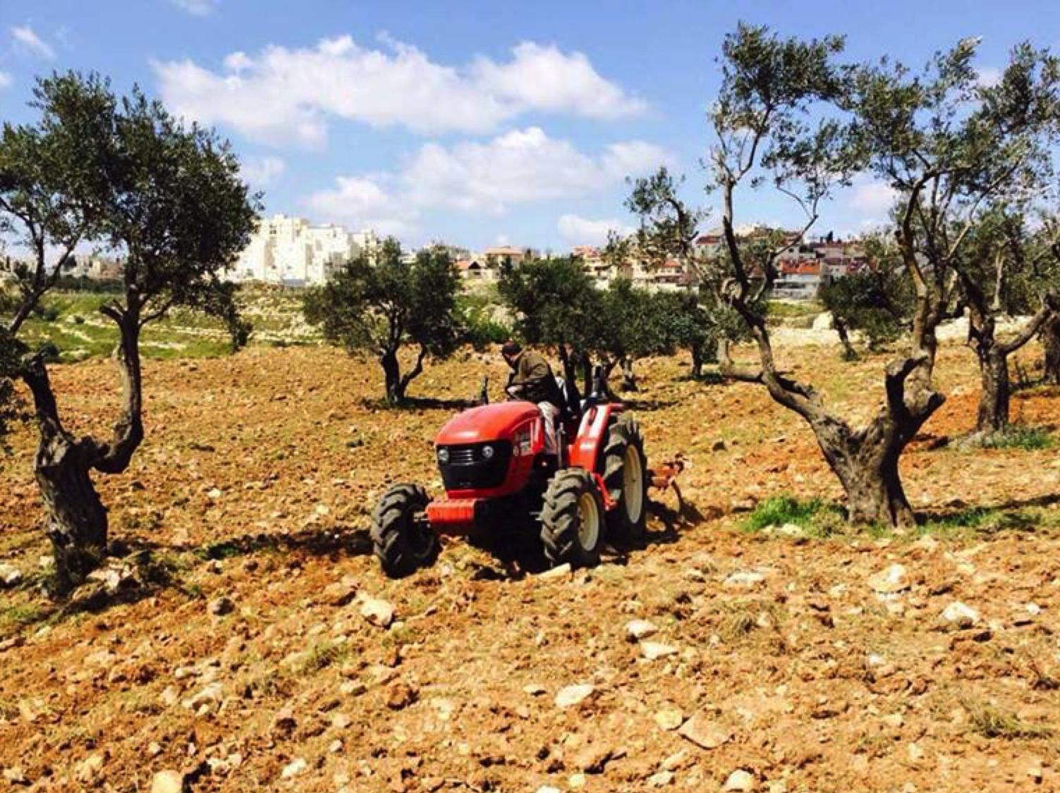 Order of Malta Olive Oil from Tantur